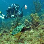 Great photography on the reefs