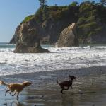 Sea Stacks with dogs in foreground