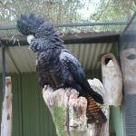 Photo of Featherdale Wildlife Park