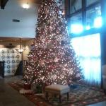 Christmas Tree in Lodge area