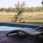 Rhino Walking Safaris at Plains Campの写真