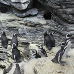 Penguins are the highlight