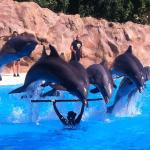Dolphins were excellent