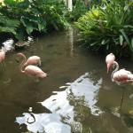 Flamingos in the lobby pond