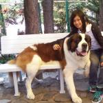 my daughter photograph with a big dog in the Mines View Park