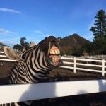 The zebra was a real character.
