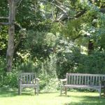 benches & trees
