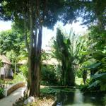 Tropical plants and trees in the gardens