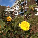 A warm Winter rose basks in the bright December sun.