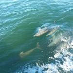 I think these were the male dolphins we spotted as they travel is pods of one to just a few.