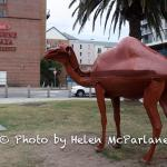 Camel statue at side of Hotel
