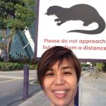 Beware of otters? In Singapore?