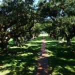 Foto de Oak Alley Plantation