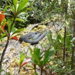 Tiger snake - the most poisonous snake in Australia