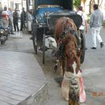 outside the hotel entrance,you can take the horse and carriage around the sightseeing areas .