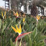 Bird of Paradise at front of hotel
