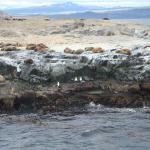 Photo of Beagle Channel