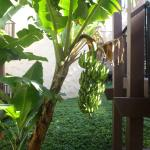 Banana tree outside the front door