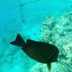 House reef, very friendly fish.