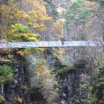 Keith on the suspension bridge with the beautiful autumn trees