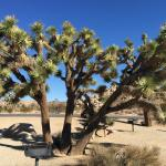 ภาพถ่ายของ BEST WESTERN Joshua Tree Hotel & Suites