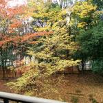 View from our balcony in Japanese style room