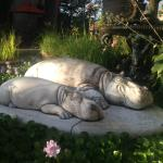 Hippos in the garden