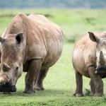 Foto de Rhino Watch Lodge