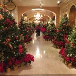 Side hall where ballrooms are. Fresh Christmas trees and poinsettias