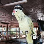 Parrot of the hotel. He speaks. Very fun