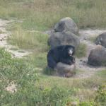 Male sloth bear - santuary is a 5 mins drive from resort