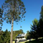 Foto de Bunya Mountains Accommodation
