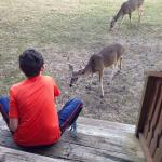Excellent Time with deer feedings.