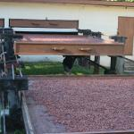 The Cocoa drying process at La Dauphine Estate