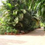 Foto de Palm Grove Cottages