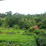 Photo de Ubud Green