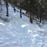 Trail to sled hill beside cabin.
