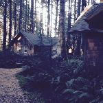 WildSpring Cabins