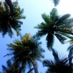 View from my hammock !!!
