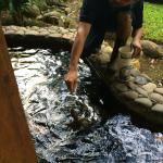 Feeding the fish and turtles
