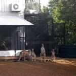 Foto de Daintree Wild Bed and Breakfast