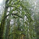 Foto Treehouse Point