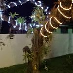 tree covered in orchids, lit up for the holidays