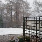 The garden covered in snow