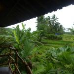 Bali Eco Stay Rice Water Bungalows照片