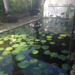 Lily pond in front of restaurant