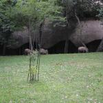 Warthogs roaming the grounds