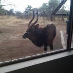 Nyala visits our bedroom