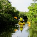 kayaking trip through the mangroves booked through their beach rentals.