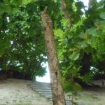 Photo of Banyan Tree Seychelles